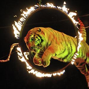 Цирки Дегтярска