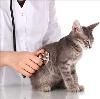 Ветеринарные клиники в Дегтярске